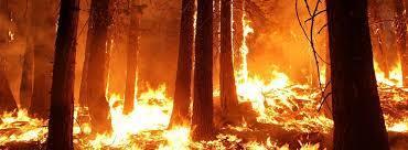 DANGER ! Feux de forêt